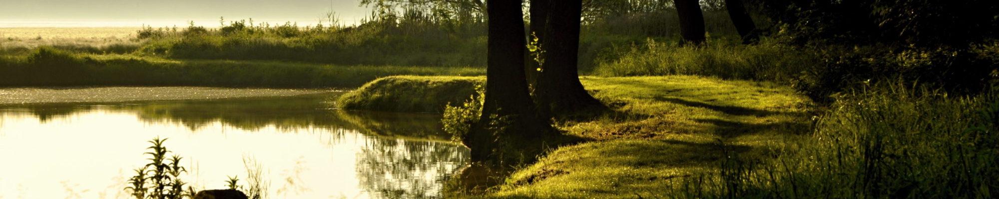 Vranovice příroda rybník Stříbrňák
